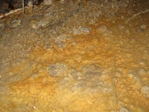 Toxic mold?