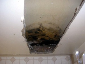 mold_wall_hidden